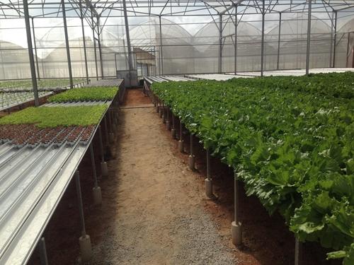 Khoa học công nghệ góp phần phát triển nông nghiệp