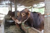 Sử dụng phụ phẩm nông nghiệp để chủ động một phần thức ăn chăn nuôi