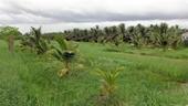 Chuyển mục đích sử dụng đất tại tỉnh Tiền Giang, Hậu Giang