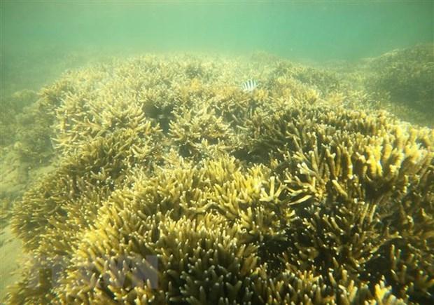 Khôi phục và bảo vệ hệ sinh thái rạn san hô trên vịnh Hạ Long