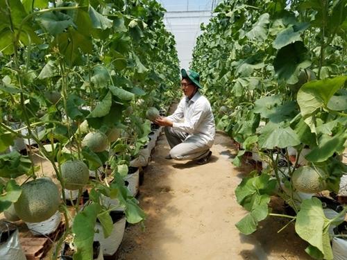 Lựa chọn giống có năng suất, chất lượng cao khi chuyển đổi cây trồng trên đất lúa