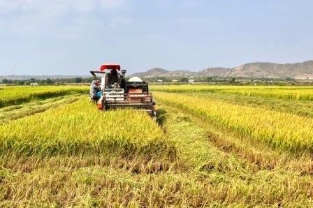 Vĩnh Phúc Giá trị sản xuất nông nghiệp tăng trưởng cao nhất trong 10 năm qua