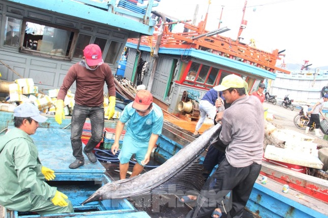 Tạm dừng hoạt động cảng cá lớn nhất miền Trung do liên quan 19 ca dương tính