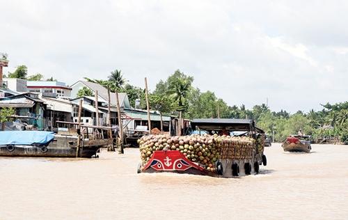 Huyện Mỏ Cày Nam Xây dựng vùng nguyên liệu tập trung, phát triển kinh tế bền vững