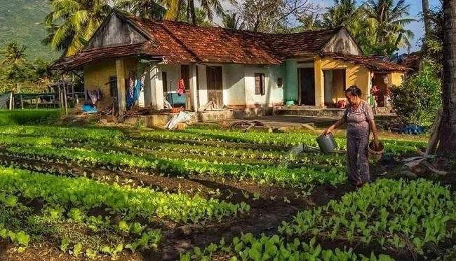 Có phải gia hạn quyền sử dụng đất nông nghiệp không