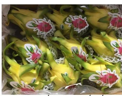 Thanh long Việt Nam bán tại Úc giá 80 nghìn đồng quả