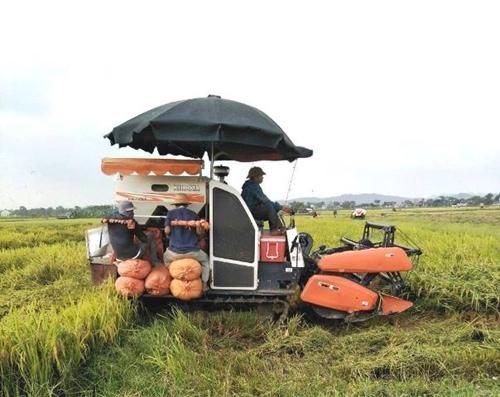 Đề xuất triển khai chương trình thu mua, dự trữ lúa gạo quốc gia