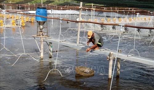 Thúc đẩy chuyển giao, ứng dụng KH CN vào sản xuất thủy sản