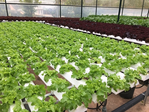 Nông nghiệp Bình Phước xác định 3 nhiệm vụ trọng tâm