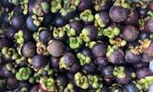 EU tăng nhập khẩu quả xoài, ổi, măng cụt từ Việt Nam