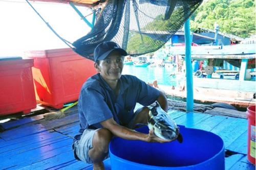Hàng trăm tấn cá lồng bè nghẽn đầu ra do dịch COVID-19
