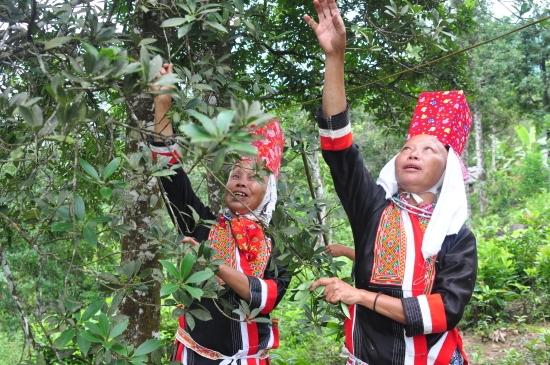 Quảng Ninh Nỗ lực thu hẹp khoảng cách giữa các vùng, miền