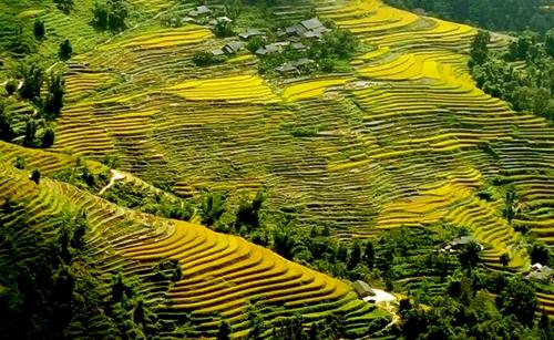 Dừng tổ chức Tuần văn hóa du lịch Qua những miền di sản ruộng bậc thang Hoàng Su Phì lần thứ VI