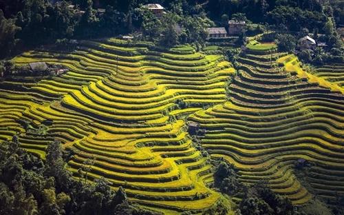 Dừng tổ chức Tuần văn hóa du lịch Qua những miền di sản ruộng bậc thang Hoàng Su Phì