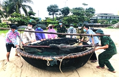 Ngư dân Đà Nẵng khẩn trương phòng, chống bão số 5