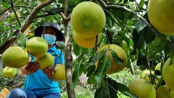 Tín dụng chính sách - Động lực giúp Hà Tĩnh giảm nghèo thành công