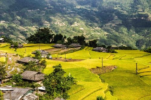 Mùa vàng ở Hà Giang vẫn đẹp trong thời điểm cuối tháng 10