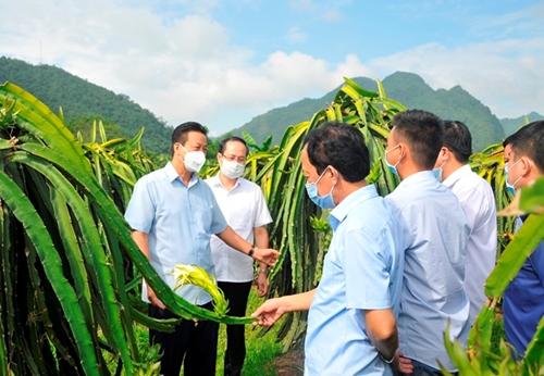 Bắc Quang Tăng tốc phát triển kinh tế nông nghiệp