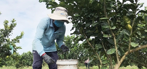 Bình Phước Phát triển 18 sản phẩm thế mạnh tham gia chương trình OCOP