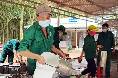 """Ngành cao su Bình Phước vững vàng trước """"bão"""" dịch COVID-19"""