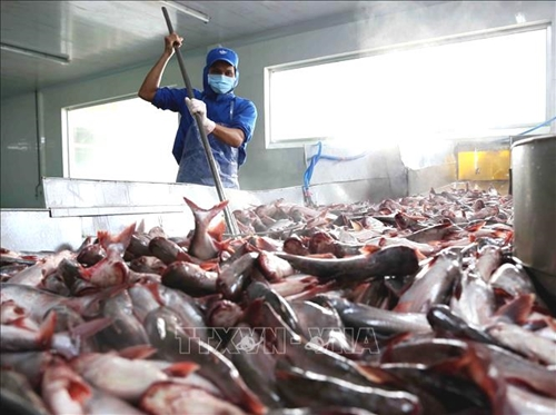 Giải pháp nào cho doanh nghiệp cá tra sau giãn cách xã hội