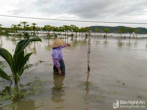 Tiếp tục khắc phục hậu quả do ảnh hưởng của bão số 6 và mưa lũ