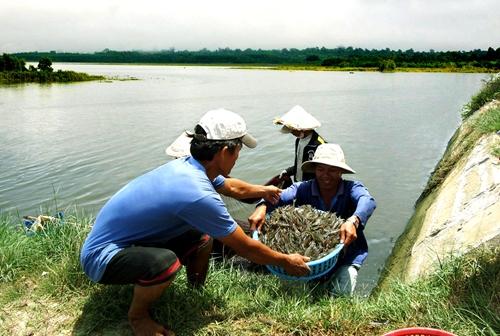 Thái Bình Thời tiết thuận lợi cho nuôi trồng thủy sản