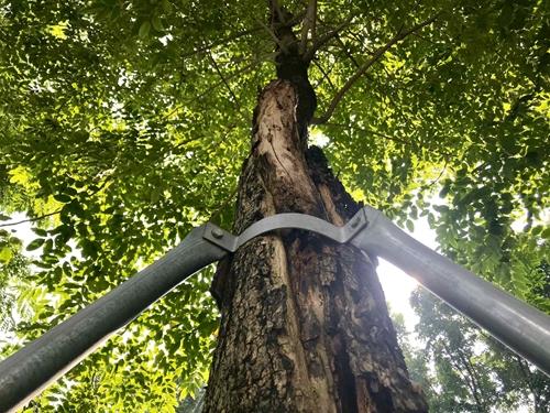 Hàng cây xanh bị siết chặt bởi gông cùm