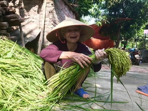 Ngát hương cốm mới của người Hà Nội
