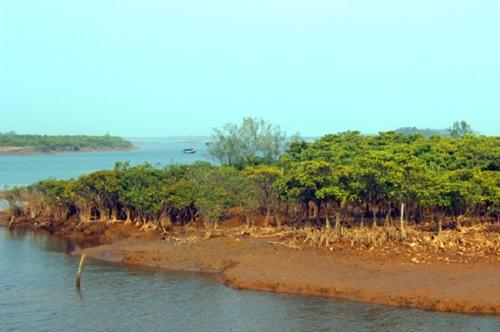 Bảo vệ, phát triển rừng vùng ven biển nhằm ứng phó biến đổi khí hậu
