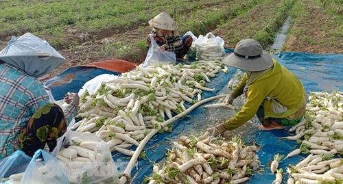 Tạo điều kiện thuận lợi cho công đoàn thu hoạch, thương lái di chuyển giữa các địa phương