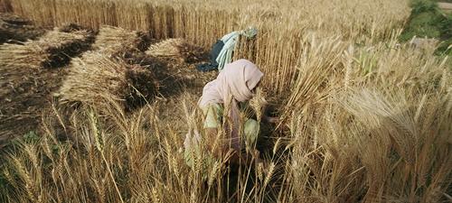 FAO Giá một số loại thực phẩm lên mức cao nhất trong 10 năm