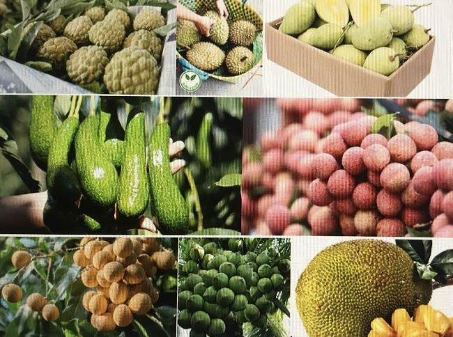 Cơ hội đang rộng mở để đưa trái cây Việt Nam ra thị trường thế giới