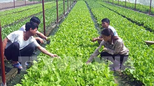 Nông nghiệp công nghệ cao thích ứng với biến đổi khí hậu