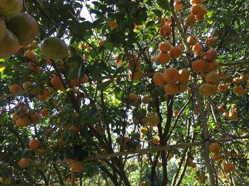 Tạo điều kiện thuận lợi cho tiêu thụ trái cây tại các tỉnh Nam bộ