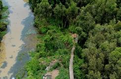 Về thăm rừng tràm Tân Lập- Long An