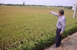 Long An Đa dạng sản phẩm nông nghiệp