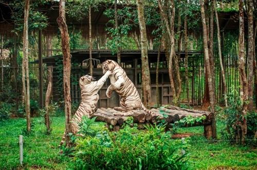Вьетнамо-Российский тропический центр был награжден за достижения в области охраны дикой природы в период 2010-2020 гг