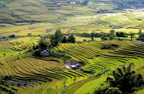 Красивые рисовые террасы в общине Таленг