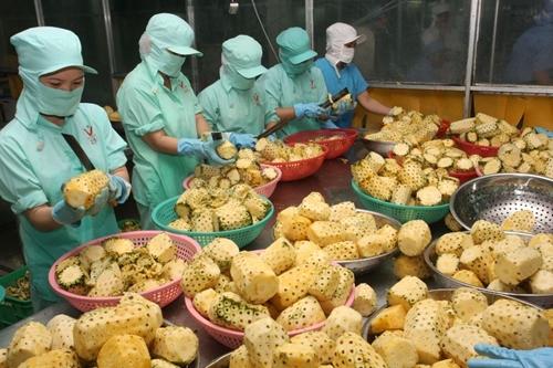 Содействие развитию торговли, вывод вьетнамских товаров на российский рынок