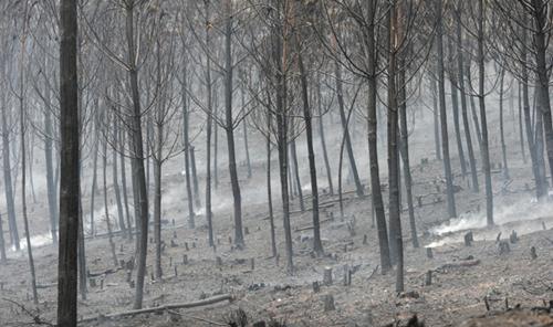 Un incendio provocado arrasa 1000 hectáreas de bosque en Galicia, España