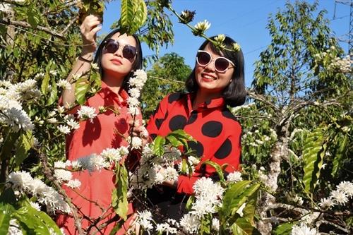Turismo cafetero: nuevas oportunidades para la industria sin humo de Vietnam